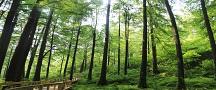 波尔登纪念林